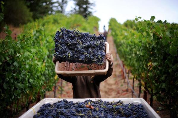 amalfi-coast-wines-day2
