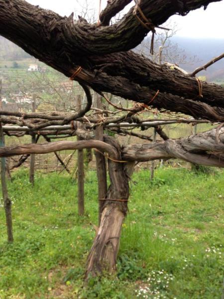 amalfi-coast-wines-day5