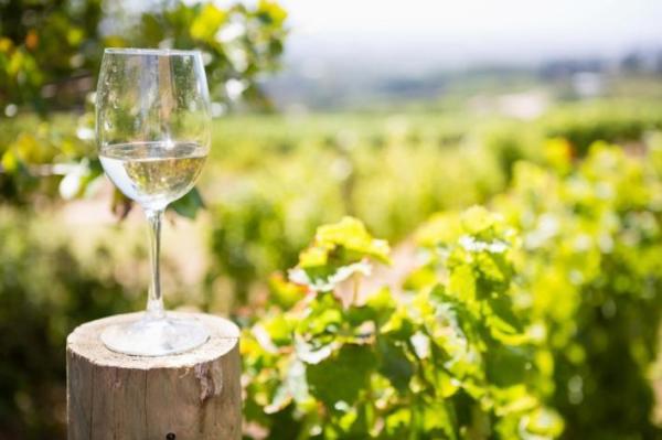 amalfi-coast-wines-day7
